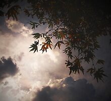right above by shan photoh