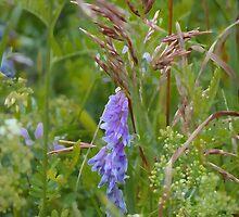 summer grass 14 by vigor