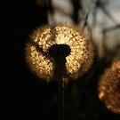 Shine on Through by Jennifer Potter