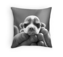 Jack Russell Puppy in hands Throw Pillow