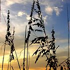 Sea Oat Silhouette by Megan Evorik