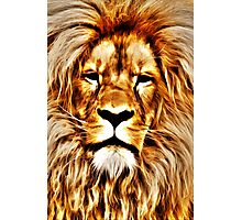 Lion Portrait Photographic Print