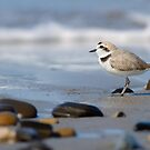 Snowy Plover and the Sea by Leroy Laverman