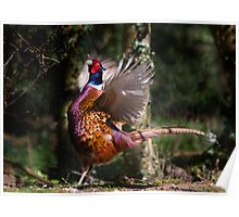 Flapping Pheasant Poster