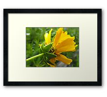 Darn It! You Found My Perfect...Or So I Thought, Place To Hide! Framed Print