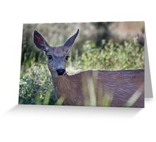 Woodland Coquette #2 Greeting Card
