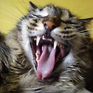 Merlin Cat Yawning by Ryan Conners