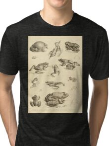 The Reptiles of British India by Albert C L G Gunther 1864 0531 Frogs Tri-blend T-Shirt