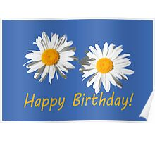 two lovely white daisy flowers  happy birthday floral photo art. Poster
