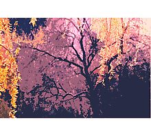 structure of nature Photographic Print
