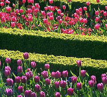 Formal Flower Bed Rows by FizzyImages