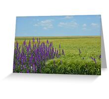 Wheat Fields with Purple Wild Flowers Greeting Card