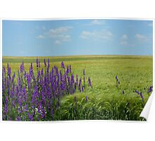Wheat Fields with Purple Wild Flowers Poster