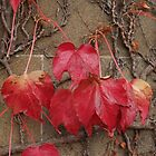 Autumn Leaves  by imagio
