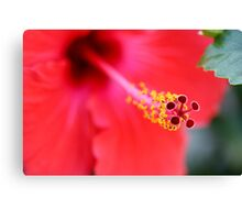 Red Hibiscus 6 Canvas Print