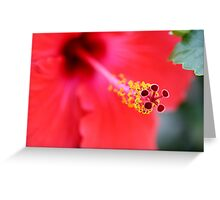 Red Hibiscus 6 Greeting Card