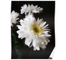 Gerbera Daisy 10 Poster