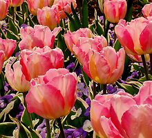 A Crowd Of Tulips by Rodney Williams