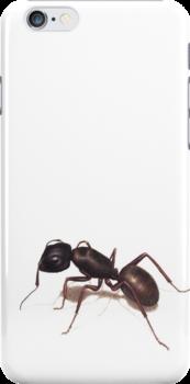 Ant by Lars Furtwaengler