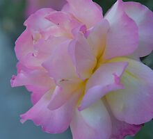 Soft and Pink by Lena127