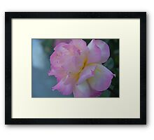 Soft and Pink Framed Print
