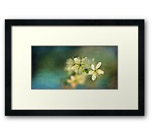 Dreamy hint of spring Framed Print