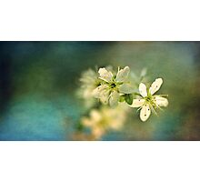 Dreamy hint of spring Photographic Print