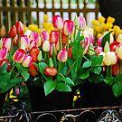 Bunches of Tulips by Jennifer Hulbert-Hortman