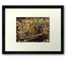 Partridge Framed Print