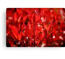 Seeing Red ... Canvas Print