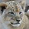 New Life - the Wild Animal Kingdom