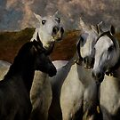 Mares by pahit