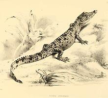 The Reptiles of British India by Albert C L G Gunther 1864 0493 Crocodilus Pondicerianus Crocodile by wetdryvac