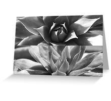 Succulent cactus - black and white diptych Greeting Card