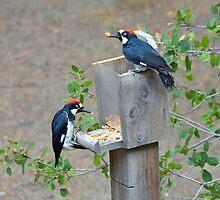 Peckers & Nuts  by Cody  VanDyke