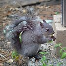 Squirrel!   by Cody  VanDyke