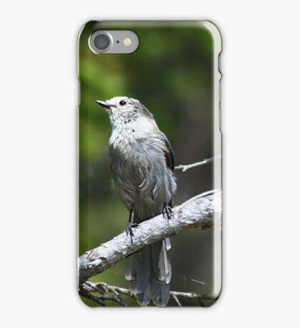 Grey Jay iPhone Case/Skin