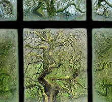 Old Oak (a study through the window pane) by Sally Green