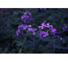 Let the Flowers Bloom (Cool Version) Photographic Print