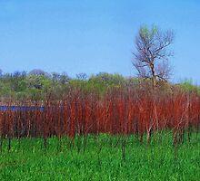 Nelson Lake Marsh by Brian Gaynor