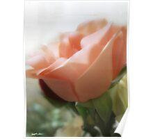 Mixed Cut Roses 4 Poster