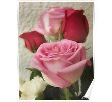 Mixed Cut Roses 6 Poster