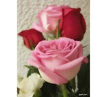 Mixed Cut Roses 6 Photographic Print