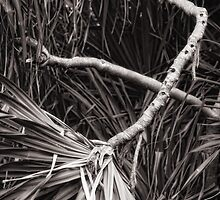 Pandanus abstract by Yves Rubin