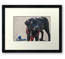Soaked to the skin Framed Print
