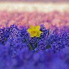 Daffodil by roumen