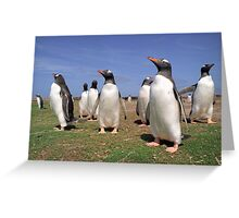 King penguins party Greeting Card