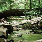 mountain stream by Phillip M. Burrow