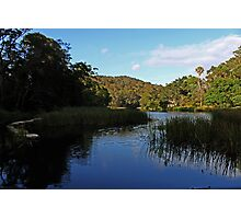 Royal National Park, NSW Photographic Print