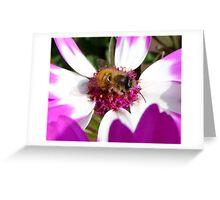 making honey Greeting Card